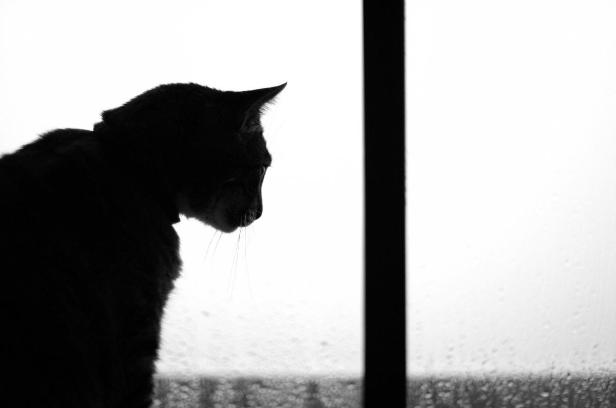 Mensagem na Garrafa - O Gato Preto, de Edgar Allan Poe